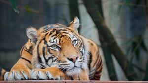 welsh_mountain_zoo