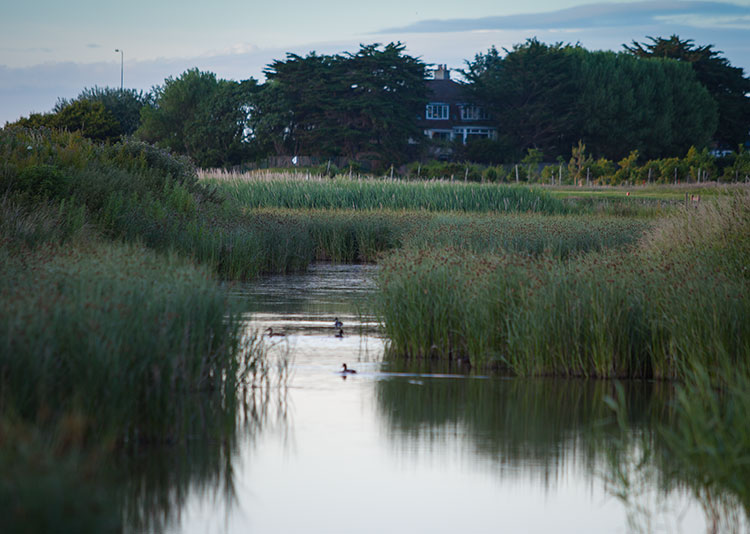Birds on pond at Rhos-on-Sea Golf Club